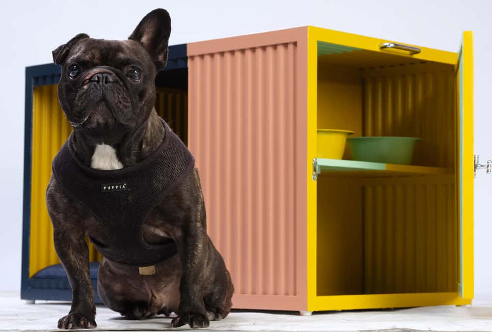 bowwow-haus-london-designer-dog-kennel-roselind-wilson-design-gus
