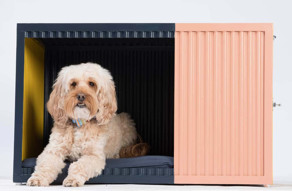 bowwow haus london designer dog kennel by roselind wilson design